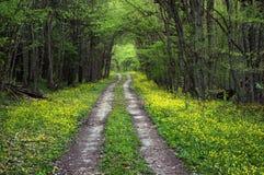 Wiosny droga Zdjęcie Stock