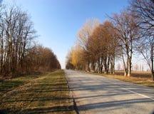 Wiosny droga Zdjęcia Stock