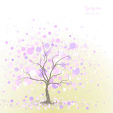 Wiosny drzewa tło Obraz Stock