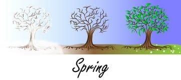 Wiosny drzewa transformacja Ilustracji