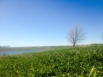 Wiosny drzewna zielona trawa Obrazy Royalty Free