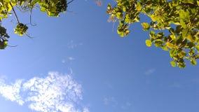 Wiosny drzewo i niebieskie niebo rama Obrazy Stock
