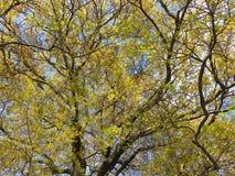 Wiosny drzewo w Kwietniu zdjęcie royalty free