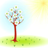 Wiosny drzewo Obraz Stock