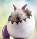 Wiosny dziecka królik Zdjęcie Stock