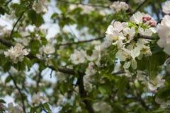 Wiosny febra obrazy royalty free