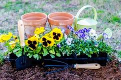 Wiosny febra fotografia stock