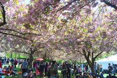 2016 wiosny festiwal Obrazy Stock