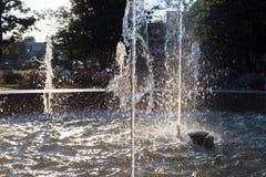 Wiosny fontanna przy ranku światłem słonecznym fotografia stock