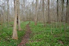 Wiosny footpath zdjęcia royalty free