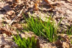 Wiosny fotosynteza Zdjęcia Stock
