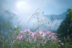 Wiosny góry kwiaty zdjęcia royalty free