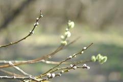 Wiosny gałąź, Easter symbol Obrazy Stock