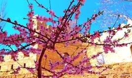 Wiosny granica lub tło sztuka z menchiami kwitniemy Zdjęcia Stock