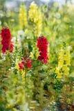 Wiosny i lata czasu kolorowy tło fotografia stock