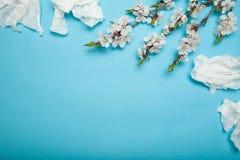 Wiosny i lata kwiecenie i sezonowe alergie Odbitkowa przestrze? dla teksta obrazy stock
