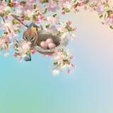 Wiosny Jabłczany okwitnięcie Obraz Royalty Free