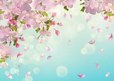 Wiosny Jabłczany okwitnięcie Fotografia Stock