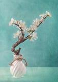 Wiosny jabłka okwitnięcia Zdjęcia Stock