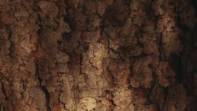 Wiosny jedlinowego drzewa słońca światła hd materiał filmowy zbiory wideo