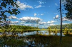 Wiosny jeziorne Obraz Royalty Free
