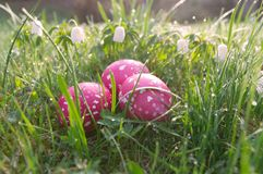Wiosny ??ka z Easter jajkami obraz royalty free