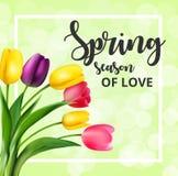 Wiosny karta z tulipanowymi kwiatami royalty ilustracja