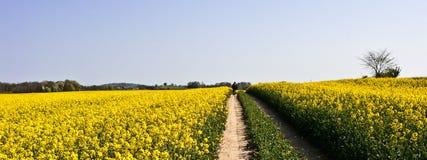 Wiosny kolarstwo Zdjęcia Stock