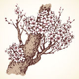 Wiosny kwiatonośny drzewo rysuje tła trawy kwiecistego wektora Obrazy Stock