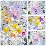 Wiosny kwiecenia gałąź drzewa Obrazy Royalty Free