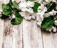 Wiosny kwiecenia gałąź na drewnianym tle obrazy stock