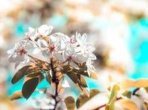Wiosny kwiecenia ogród Obrazy Royalty Free