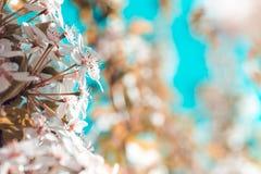 Wiosny kwiecenia ogród Zdjęcia Stock
