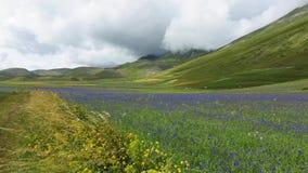 Wiosny kwiecenie w Casrelluccio zdjęcie wideo