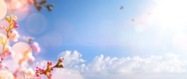 Wiosny kwiecisty tło; Menchia Kwitnie drzewa przeciw wiosny niebu Zdjęcia Royalty Free