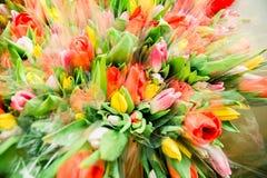 Wiosny kwitnienie tulipany zdjęcia stock