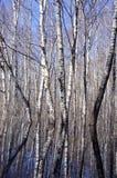Wiosny lasowego wirh wodni i drzewni odbicia Obraz Stock