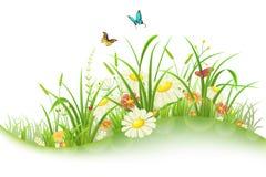 Wiosny lata łąka Zdjęcia Royalty Free