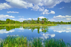 Wiosny lata krajobrazu niebieskiego nieba chmur stawu zieleni rzeczni drzewa zdjęcia royalty free