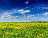 Wiosny lata tło - kwitnąć śródpolną łąkę Obraz Stock