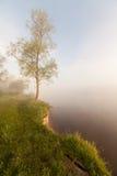 Wiosny linia brzegowa Mgłowy Halny jezioro przy wschodem słońca Zdjęcie Royalty Free