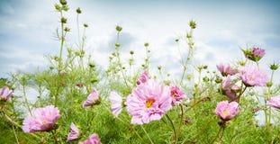 Wiosny lub lata panoramy sztandar z różowymi kwiatami zdjęcie royalty free