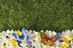 Wiosny lub lata rabatowy tło Obraz Royalty Free