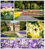Wiosny lub lato kwiatu set Zdjęcie Stock