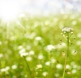 Wiosny lub lato natury abstrakcjonistyczny tło Obraz Royalty Free
