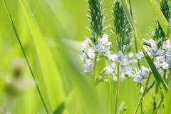 Wiosny lub lato natury abstrakcjonistyczny tło Fotografia Stock