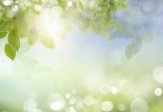 Wiosny lub lato sezonu natury abstrakcjonistyczny tło Obrazy Royalty Free