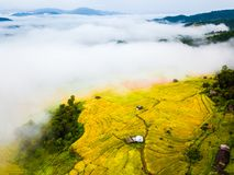 Wiosny mgła w górach, Tarasowaci ryż na górze, Północnej Tajlandia Zdjęcie Stock
