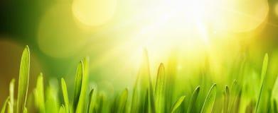 Wiosny Naturalny tło Z słońcem Obrazy Royalty Free