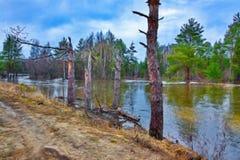 Wiosny natury krajobraz Fotografia Royalty Free